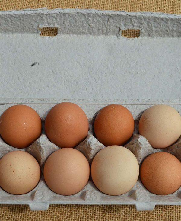 local-organic-eggs