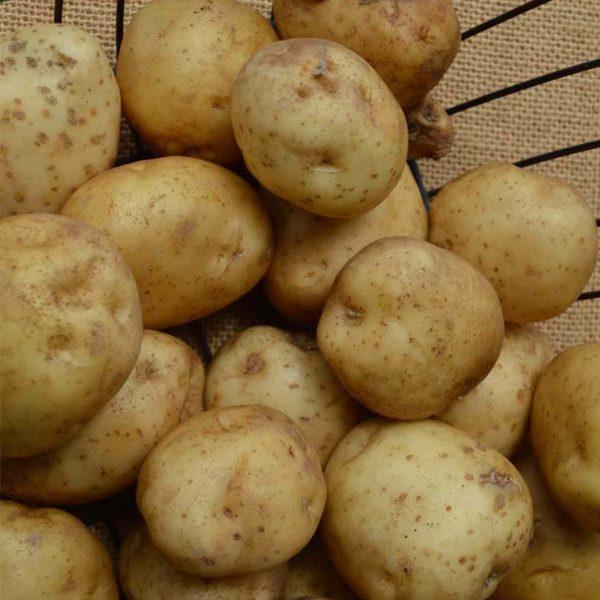local-potatoes