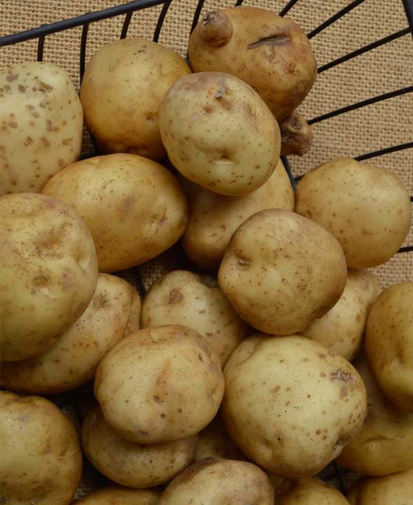 local-potatoes
