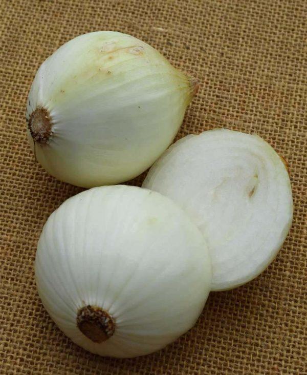 local-sweet-onion