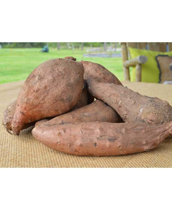 organic-local-sweet-potato